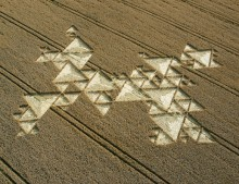 Savernake Forest,  Wiltshire | 19th July 2005 | Wheat OH