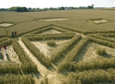Avebury Henge, Wiltshire | 24th July 2005 | Wheat P3