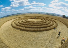 The Ridgeway Avebury, Wiltshire | 31st July 2005 | Wheat P