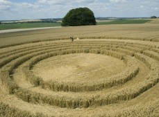 The Ridgeway Avebury, Wiltshire | 31st July 2005 | Wheat P2