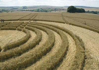 The Ridgeway Avebury, Wiltshire | 31st July 2005 | Wheat P3
