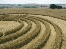 The Ridgeway Avebury, Wiltshire | 31st July 2005 | Wheat P3