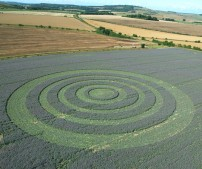 Collingbourne Kingston, Wiltshire | 3rd August 2005 | Borage L