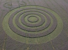 Collingbourne Kingston, Wiltshire | 3rd August 2005 | Borage L2
