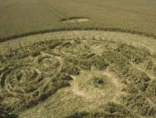 Marden (1), Wiltshire | 9th August 2005 | Wheat P3