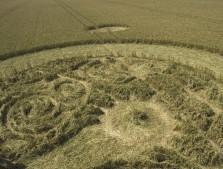 Marden (1), Wiltshire | 9th August 2005 | Wheat P3