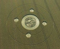 Marden (1), Wiltshire | 9th August 2005 | Wheat OH