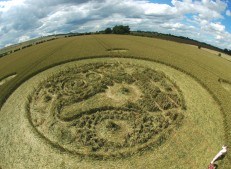 Marden (1), Wiltshire | 9th August 2005 | Wheat P