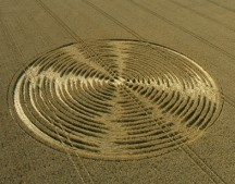 Shalbourne, Wiltshire | 9th August 2005 | Wheat L