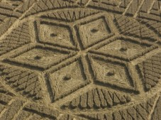 Woolstone Hill, Oxfordshire | 13th August 2005 | Wheat CL