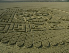 Woolstone Hill, Oxfordshire | 13th August 2005 | Wheat LOW