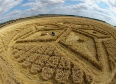 Woolstone Hill, Oxfordshire | 13th August 2005 | Wheat P
