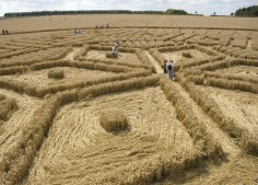 Woolstone Hill, Oxfordshire | 13th August 2005 | Wheat P2