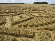 Woolstone Hill, Oxfordshire | 13th August 2005 | Wheat P3