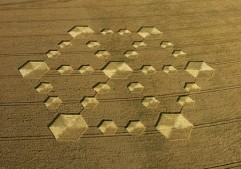 Cherhill, Wiltshire | 21st August 2005 | Wheat L