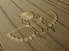 East Field Alton Barnes, Wiltshire | 21st August 2005 | Wheat L