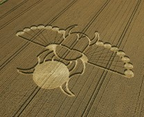 East Field Alton Barnes, Wiltshire | 21st August 2005 | Wheat OH