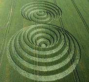 Windmill Hill, Wiltshire | 30th June 2006 | Wheat L2