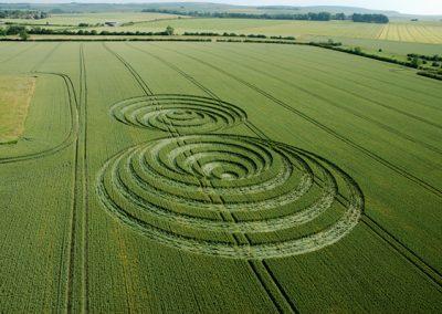 Windmill Hill, Wiltshire | 30th June 2006 | Wheat L