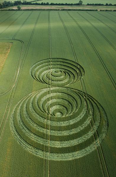 Windmill Hill, Wiltshire | 30th June 2006 | Wheat L3
