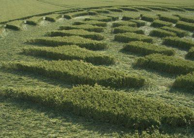 Uffington Castle, Oxfordshire | 8th July 2006 | Wheat P2