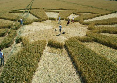 Wayland's Smithy, Oxfordshire | 8th July 2006 | Wheat P2