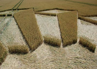 Wayland's Smithy, Oxfordshire | 8th July 2006 | Wheat P4