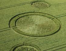 Charlbury Hill, Oxfordshire   9th July 2006   Wheat L2
