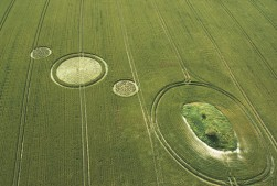 Charlbury Hill, Oxfordshire | 9th July 2006 | Wheat L3