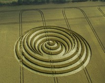Aldbourne, Wiltshire   14th July 2006   Wheat L