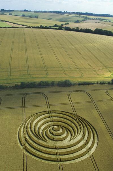 Aldbourne, Wiltshire | 14th July 2006 | Wheat L