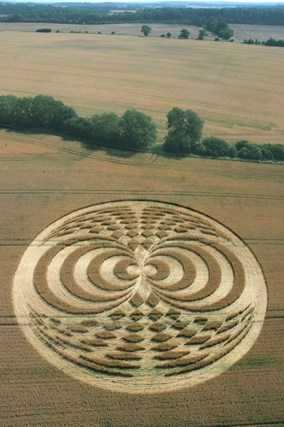 Straight Soley, Berkshire | 20th July 2006 | Wheat L