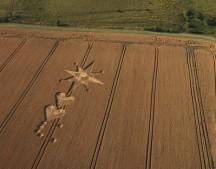 Milk Hill, Wiltshire | 22nd July 2006 | Wheat L