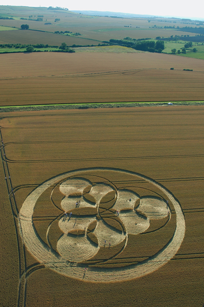 Windmill Hill, Wiltshire | 23rd July 2006 | Wheat L