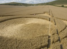 East Field Alton Barnes, Wiltshire   28th July 2006   Wheat P3