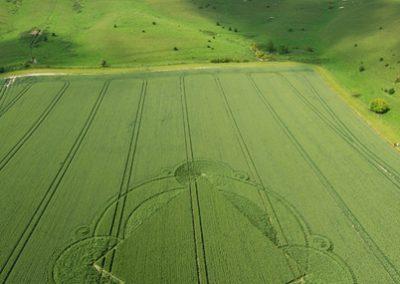 Alton Barnes White Horse, Wiltshire | 7th June 2007 | Wheat
