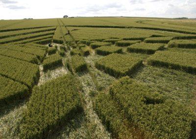 West Kennett Longbarrow, Wiltshire | 28th June 2007 | Wheat P3