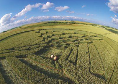 West Kennett Longbarrow, Wiltshire | 28th June 2007 | Wheat P2