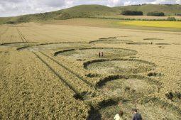 East Field Alton Barnes, Wiltshire | 7th July 2007 | Wheat P3