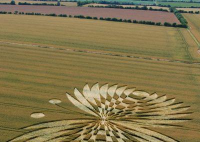 Hailey Wood Ashbury, Oxfordshire | 16th July 2007 | Wheat L