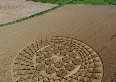 Sugar Hill Aldbourne, Wiltshire | 1st August 2007 | Wheat L