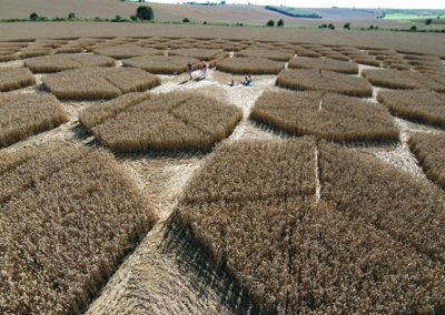 Sugar Hill Aldbourne, Wiltshire | 1st August 2007 | Wheat P