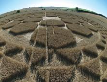 Sugar Hill Aldbourne, Wiltshire | 1st August 2007 | Wheat P2