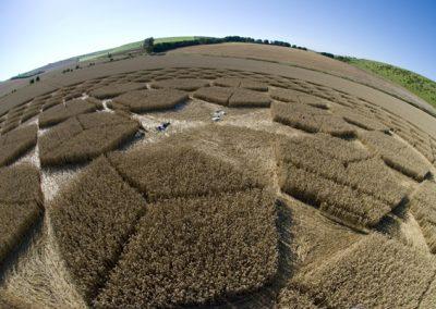 Sugar Hill Aldbourne, Wiltshire | 1st August 2007 | Wheat P3