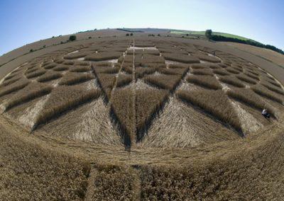 Sugar Hill Aldbourne, Wiltshire | 1st August 2007 | Wheat P4