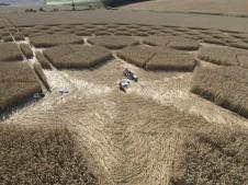 Sugar Hill Aldbourne, Wiltshire | 1st August 2007 | Wheat P5