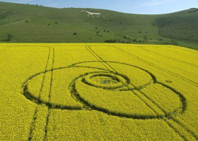 Milk Hill, Wiltshire | 4th May 2008 | Oilseed Rape L
