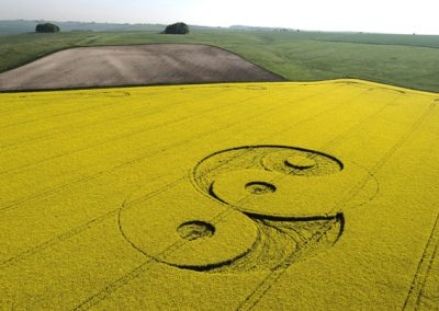 Avebury Ave, Wiltshire | 8th May 2008 | Oilseed Rape L2