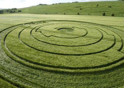 Barbury Castle, Wiltshire | 1st June 2008 | Barley LOW2