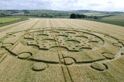 The Ridgeway, Wiltshire | 15th June 2008 | Barley LOW